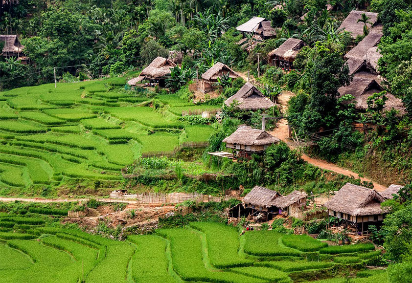 Simple stilt houses are scattering among endless terraces of rice